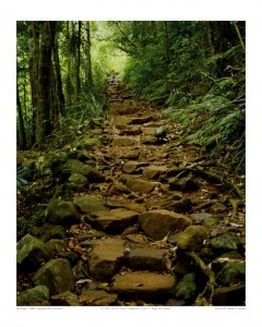 """""""To The Top Of Mount Warning"""" (3 of 4) - NSW, Australia"""